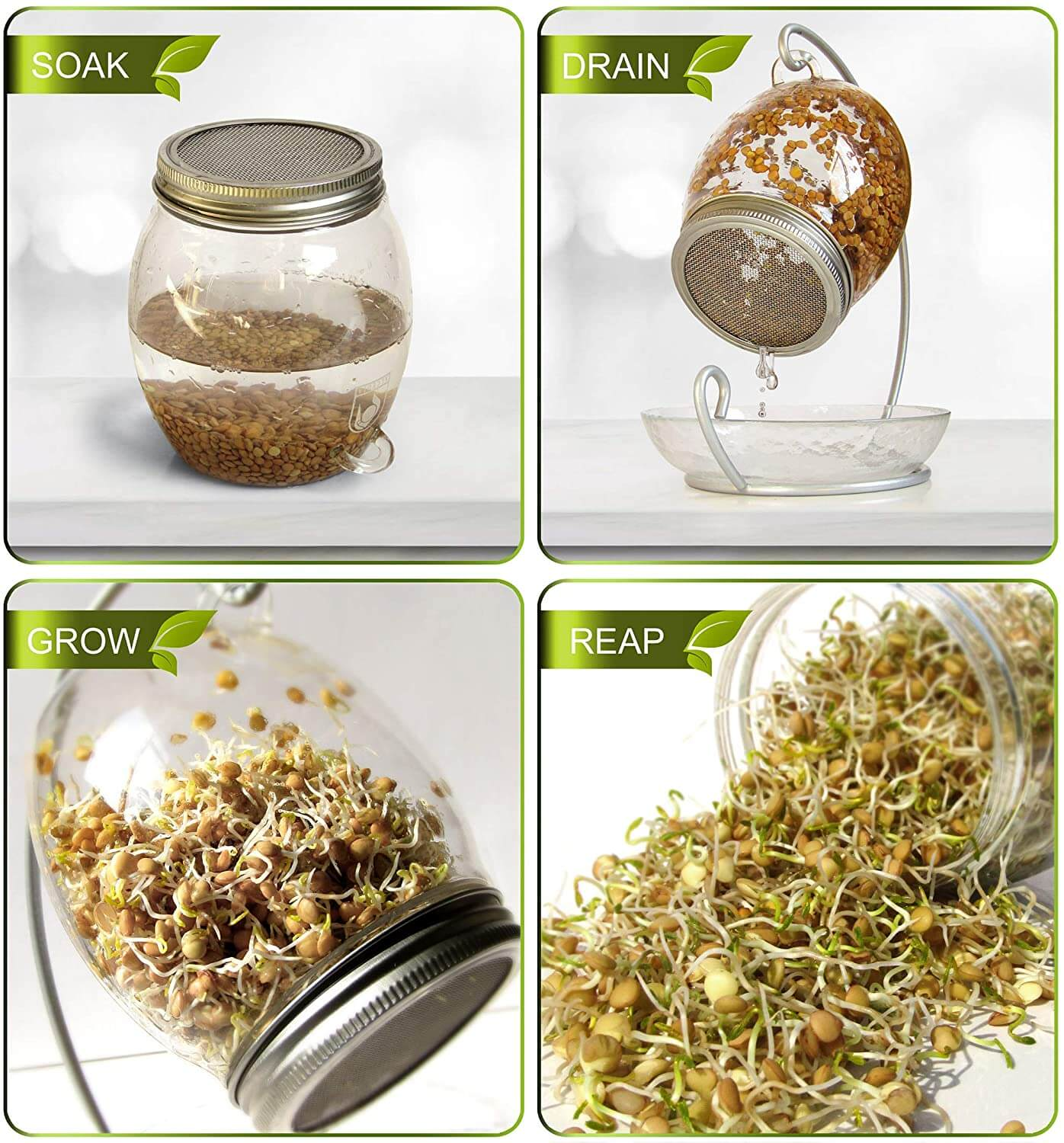 The complete process of growing sprouts in a glass sprout jar at home