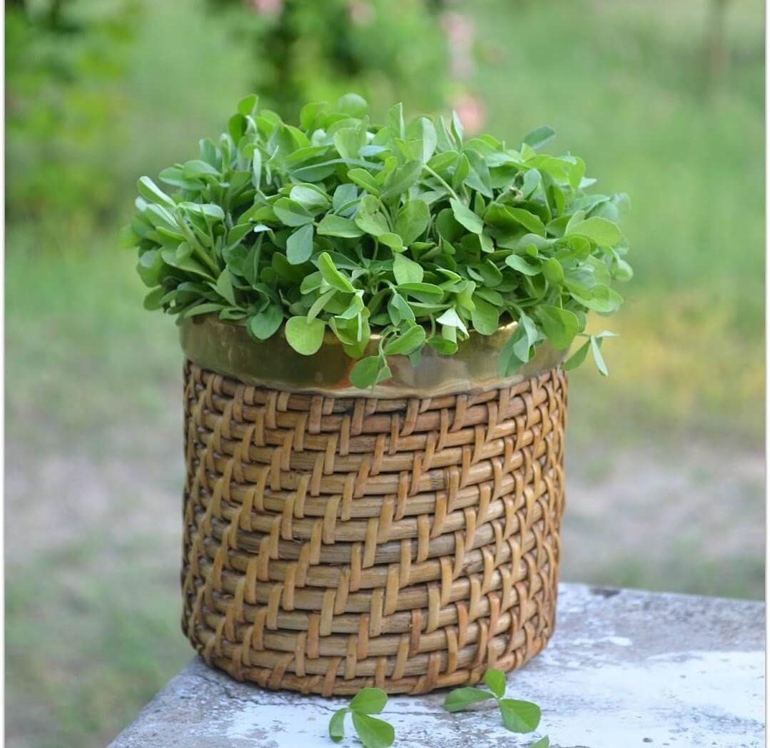 Fenugreek Leaves in a Basket